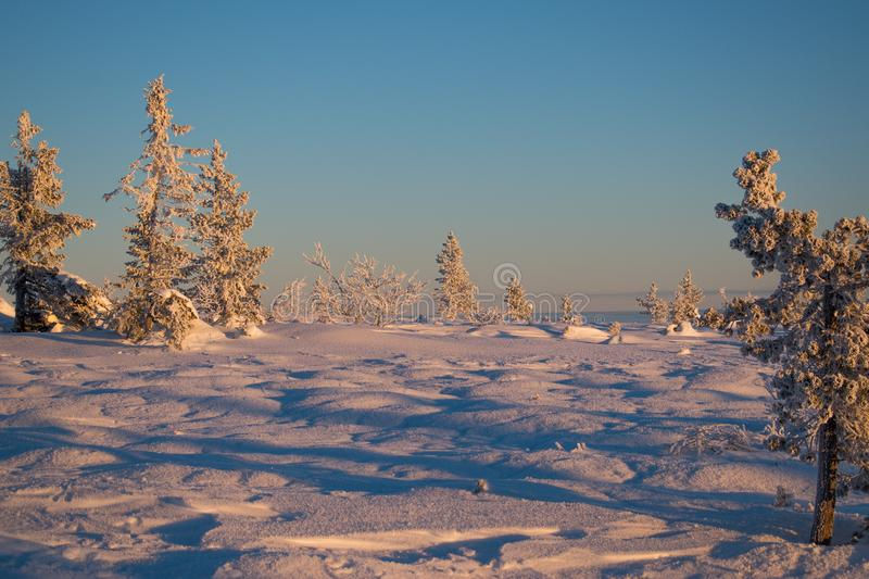 Winter landscape in Hedmark county Norway. Snow covered ground and beautiful frozen trees. At Sunset in a december day royalty free stock image