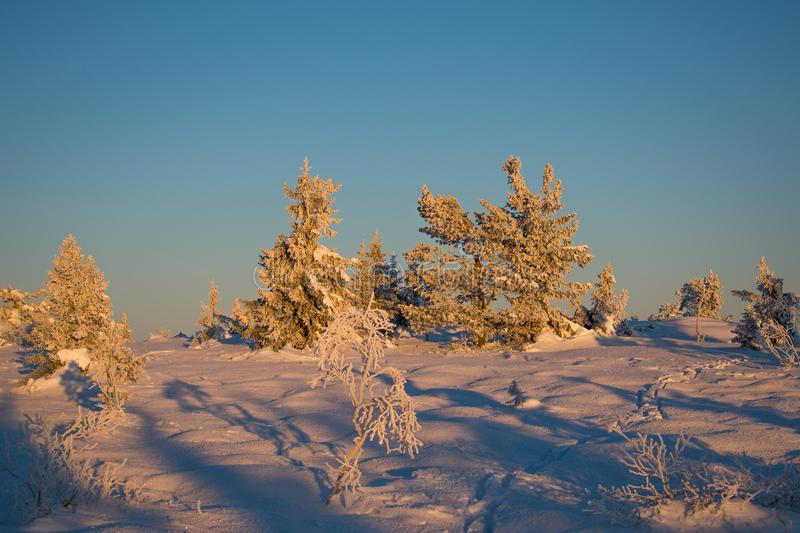 Winter landscape in Hedmark county Norway. Snow covered ground and beautiful frozen trees. At Sunset in a december day stock image