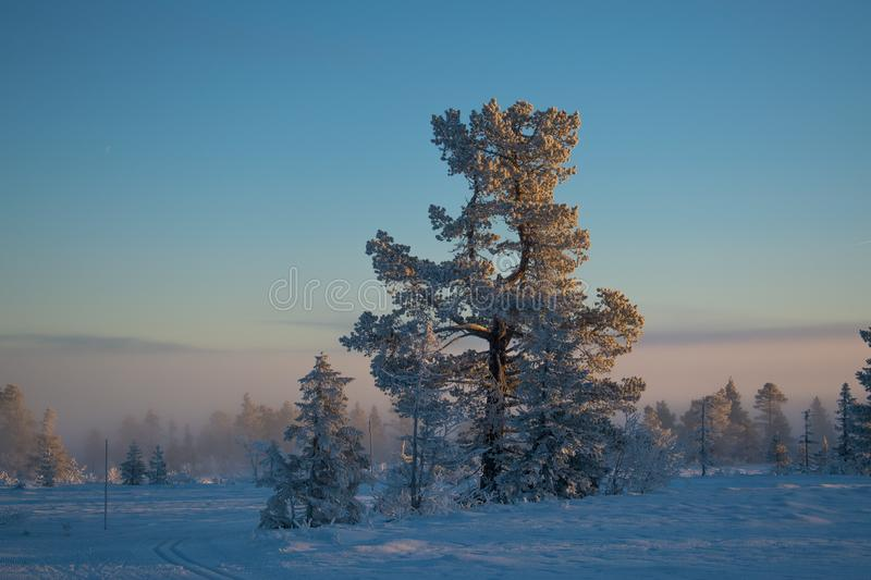 Winter landscape in Hedmark county Norway. Beautiful pine tree in the magic foggy december landscape royalty free stock photos