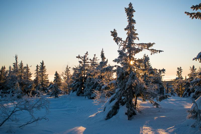 Winter landscape in Hedmark county Norway. Snow covered ground and beautiful frozen trees. At Sunset in a december day royalty free stock photos