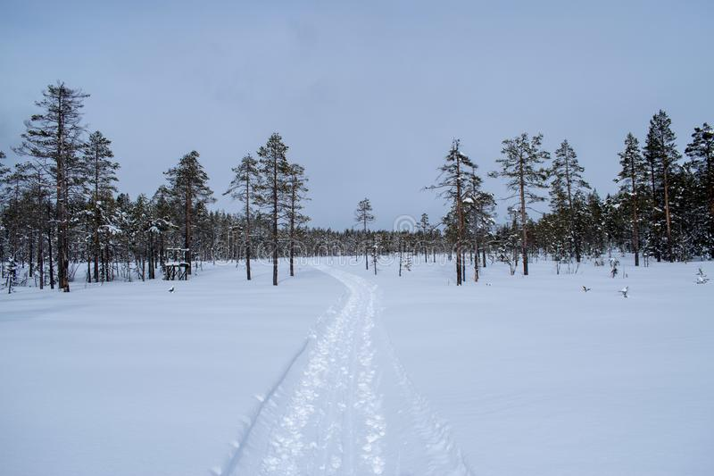 Winter landscape in Hedmark county Norway.  Winter wonderland, snow covered trees and a lot of snow on the ground. Winter landscape hedmark county norway royalty free stock image