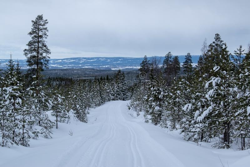 Winter landscape in Hedmark county Norway.  Winter wonderland, snow covered trees and a lot of snow on the ground. Winter landscape hedmark county norway stock photo