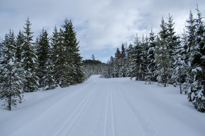 Winter landscape in Hedmark county Norway.  Winter wonderland, snow covered trees and a lot of snow on the ground. Winter landscape hedmark county norway royalty free stock images
