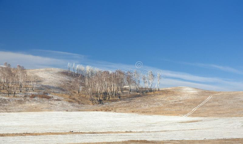 Winter landscape with a hill covered with a yellow dry grass, bare trees and first snow under dark blue sky. In Khakassia, Russia royalty free stock photography