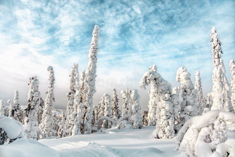 Winter landscape. Karelia. Russia stock photo
