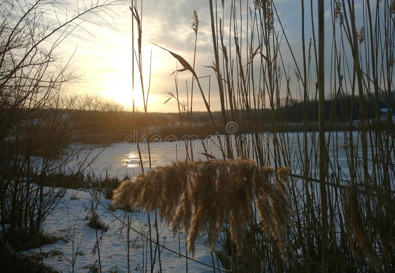 Winter landscape with a lake and high dry grass. Snow, ice, river, reeds, clouds and blue sky. Dawn, the sunrise royalty free stock photos