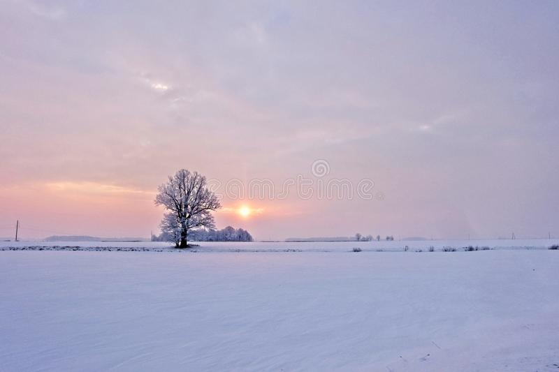 Winter landscape. Lonely tree in a snowy field at sunrise - image royalty free stock photography
