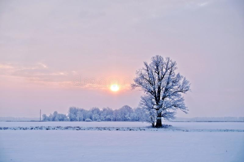 Winter landscape. Lonely tree in a snowy field at sunrise - image stock photography
