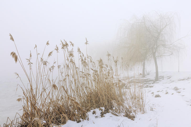 Winter landscape with the mist. Snowy shore of the lake in the fog royalty free stock photo