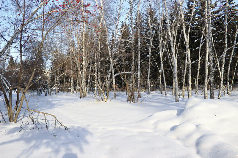 Winter landscape. Mixed forest stock images