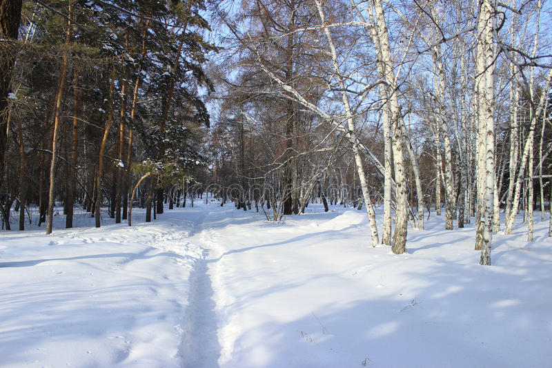 Winter landscape. Mixed forest royalty free stock images