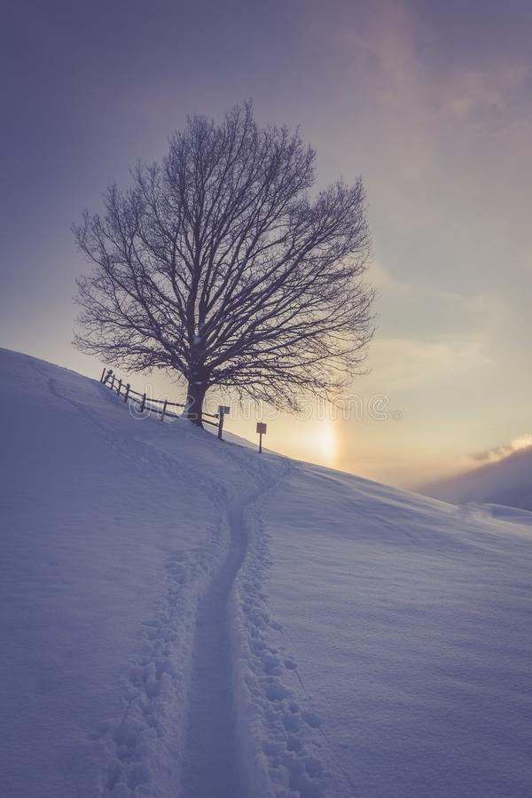 Snowy winter landscape in the alps, sunrise with halo phenomena. Winter landscape in the morning: Sunrise and halo phenomena, alps, snow, nature, beauty royalty free stock photo