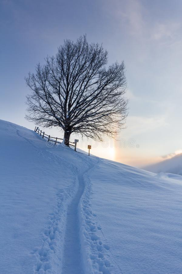 Snowy winter landscape in the alps, sunrise with halo phenomena. Winter landscape in the morning: Sunrise and halo phenomena, alps, snow, nature, beauty royalty free stock image