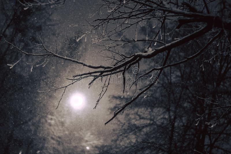 Winter atmospheric night forest scene with falling snow from sky and full moon backlight illuminating bare tree branches stock photography