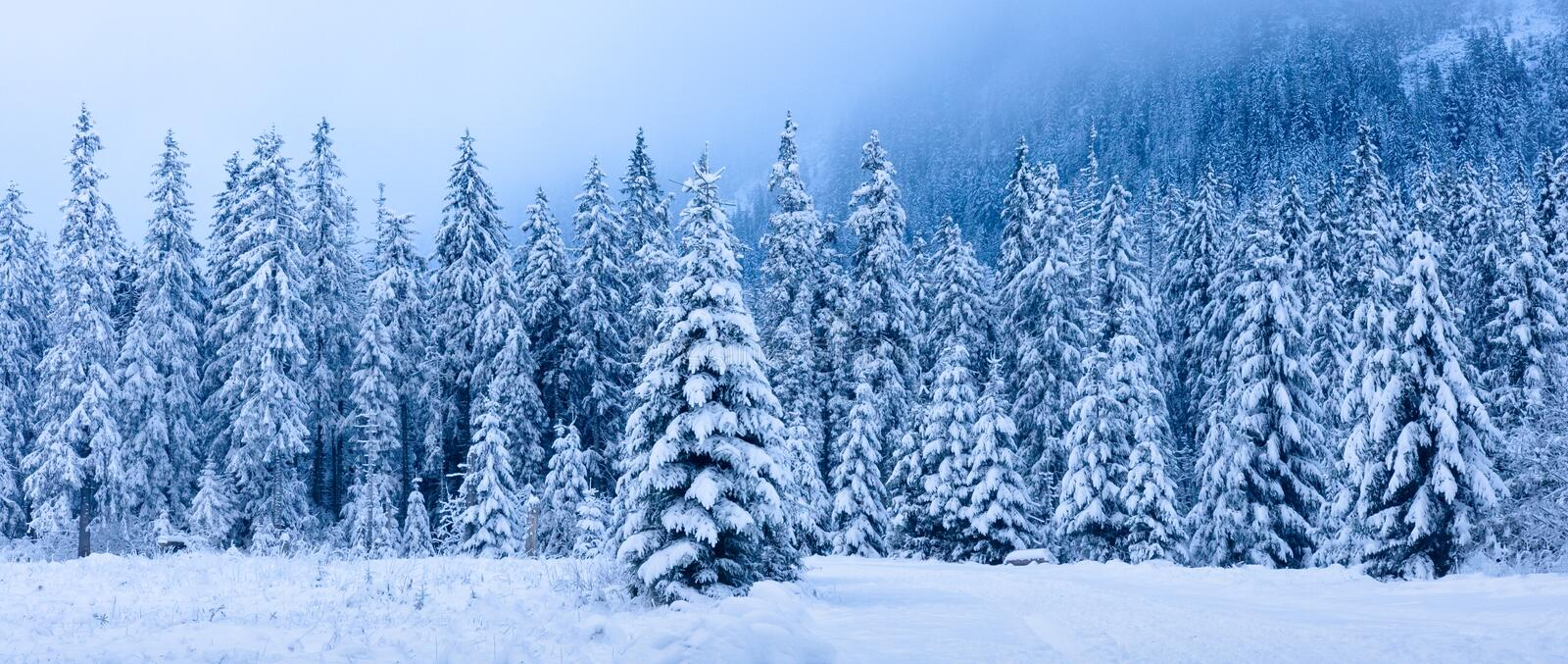 Winter landscape. Panoramic winter forest. Snowy Christmas trees in mountains. Frosty nature in mountain valley royalty free stock photos