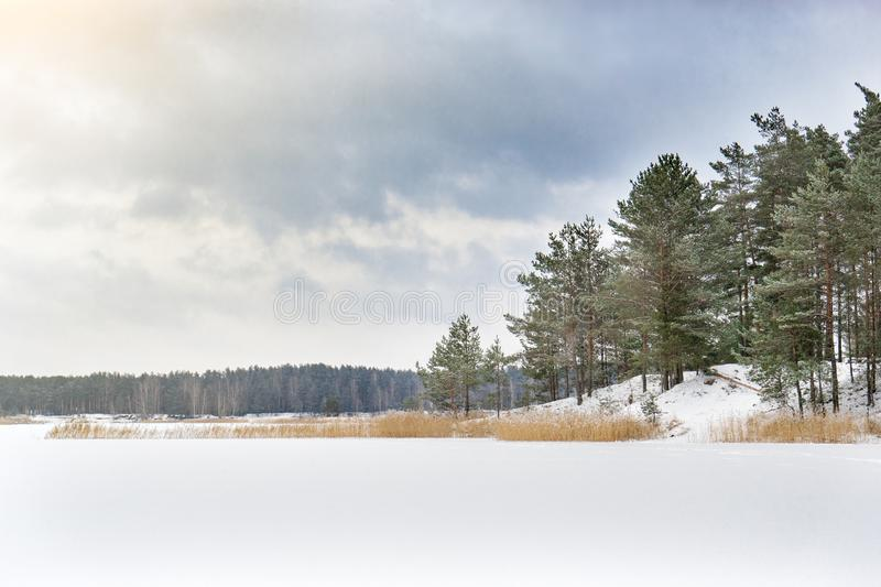 Winter landscape with pine forest and frozen lake. Frost on pines in cold bright sunny day royalty free stock photo