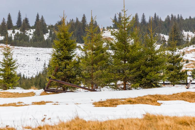 Download Winter Landscape And Pine Trees Stock Image - Image of snowy, trees: 105037655