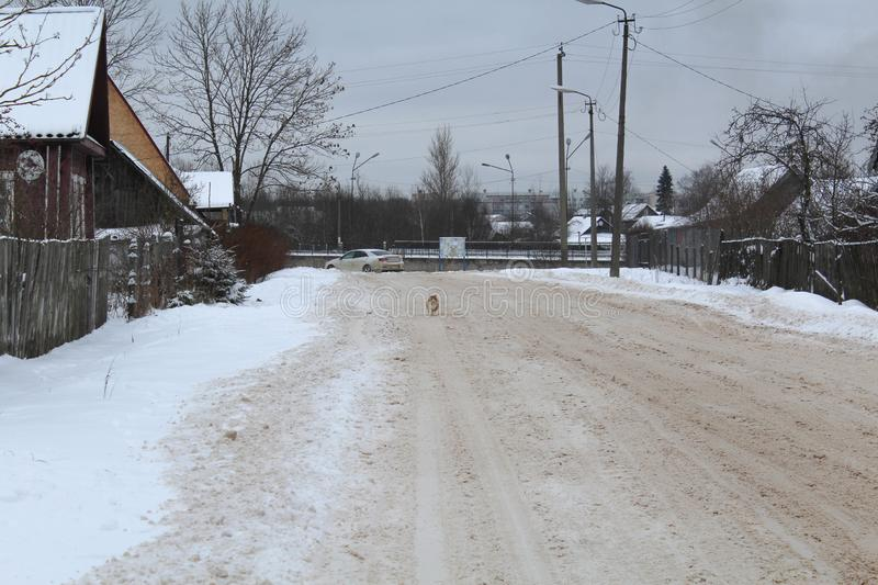 Winter landscape. poorly cleaned the road. Cat on the road. A lot of snow. royalty free stock photography
