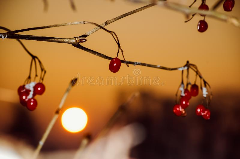 winter landscape with rich snowflake and red darts stock images