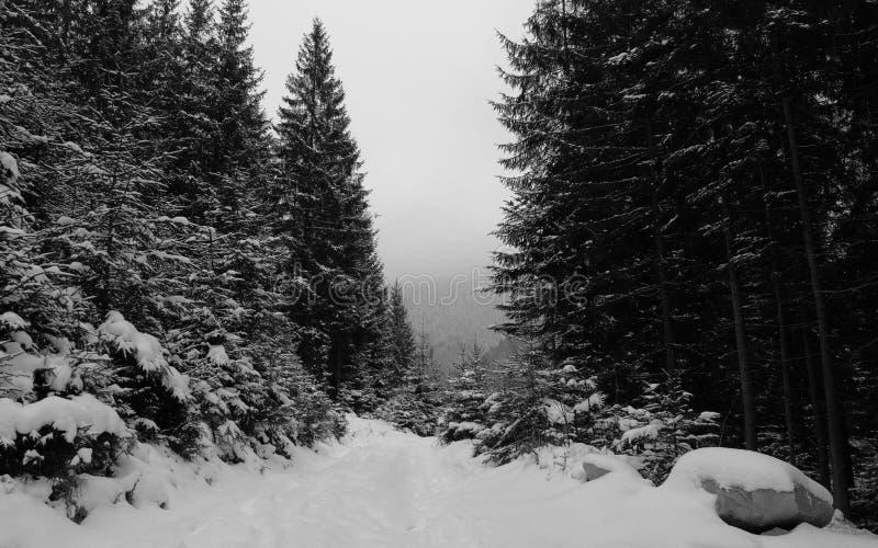 Winter landscape at road in dense forest in dusk stock image