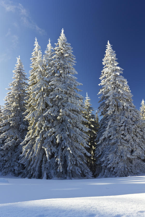 Winter landscape in Rodopi mountain_4 stock photography