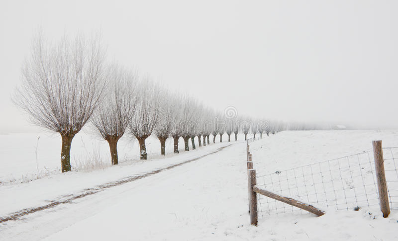 Download Winter Landscape With A Row Of Pollard Willows Stock Image - Image: 23261929