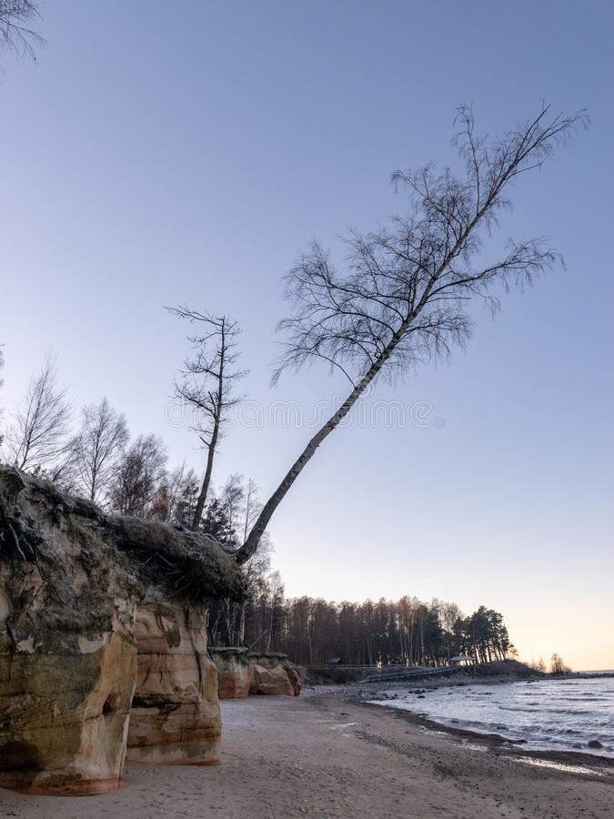 Winter landscape with sandstone cliff and trees by the sea,m. Winter landscape with sandstone cliff and trees by the sea, early morning stock photography