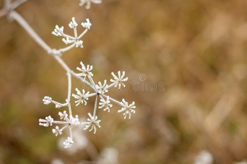 Winter landscape.Winter scene .Frozenned flower selective focus. Winter landscape background.Winter scene .Frozenned flower selective focus royalty free stock photos