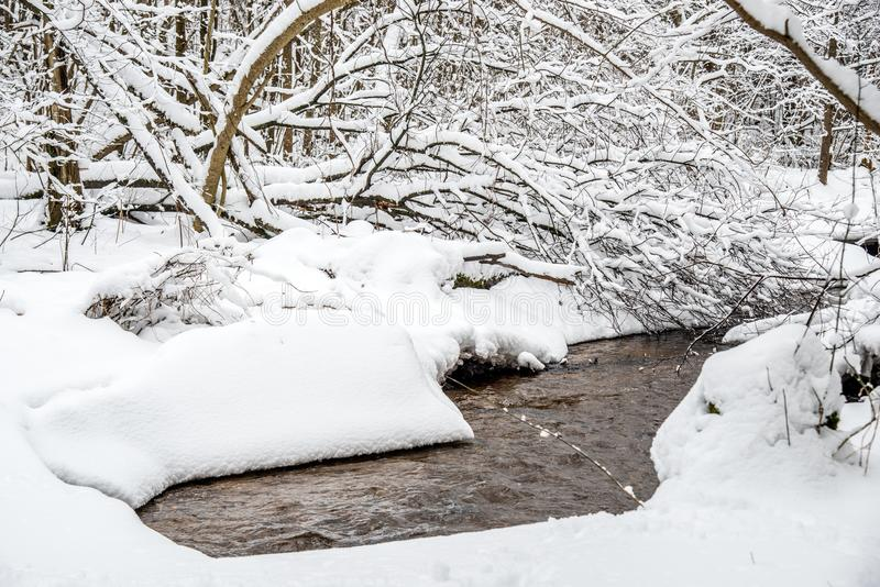 forest tiny river in winter stock photos