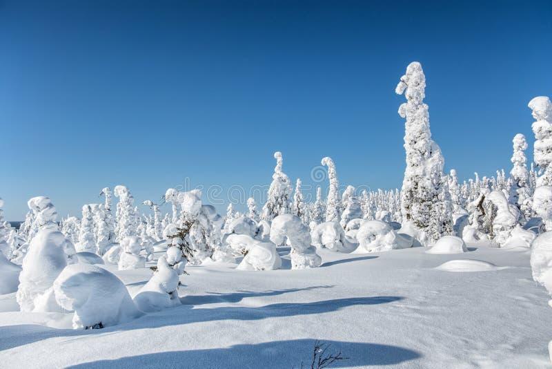 Winter landscape. The snow-clad trees on Mount Nuorunen. royalty free stock image