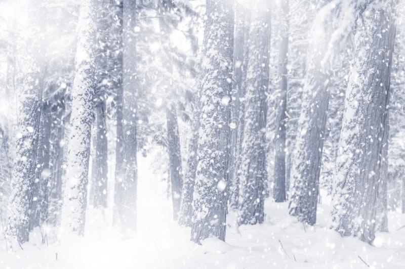 Snow-covered forest royalty free stock photos