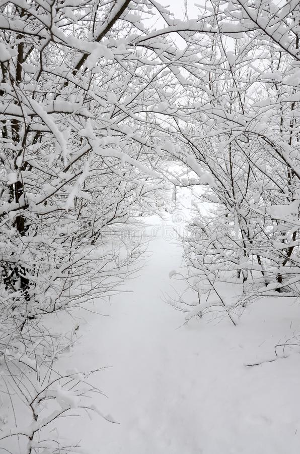 Winter landscape in a snow-covered park after a heavy wet snowfall. A thick layer of snow lies on the branches of trees.  royalty free stock photos