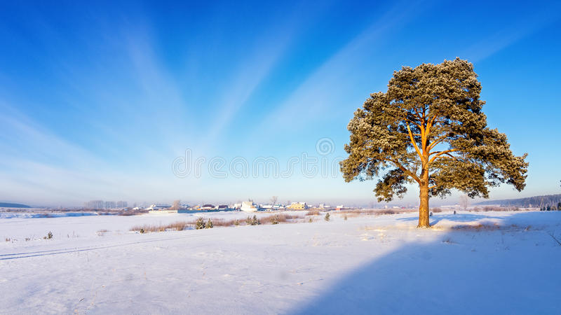 Winter landscape with snow-covered pine tree on the shore of the frozen river, Russia, Ural. January royalty free stock image
