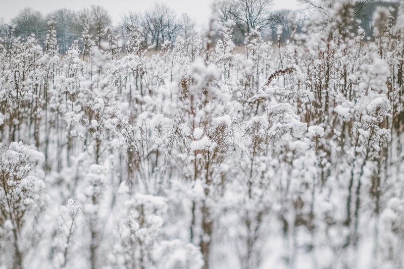 Winter landscape with snow covered plants and trees. Small depth of field for enhancing effect. Winter scene . Frozen flowers. And plants. Winter background stock images