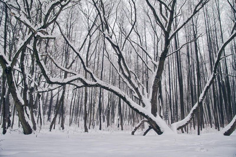 Winter landscape with snow covered trees stock photography