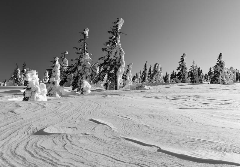 Winter landscape of snow ghosts - Harghita madaras. Picture taken at of snow covered trees on the top of the Harghita Madaras Transylvania, Romania royalty free stock photos
