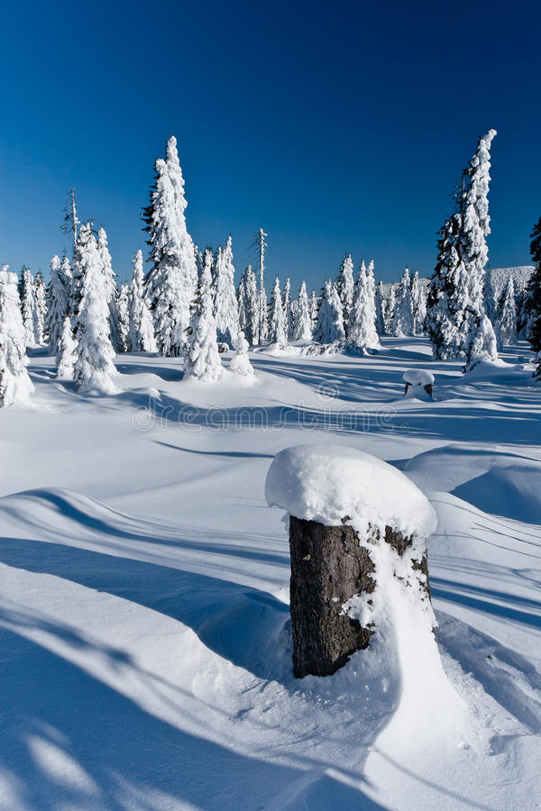 Winter landscape of snow ghosts - Harghita madaras. Picture taken at of snow covered trees on the top of the Harghita Madaras Transylvania, Romania stock images