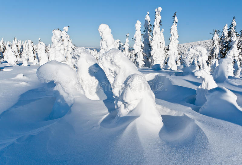 Winter landscape of snow ghosts - Harghita madaras. Picture taken at of snow covered trees on the top of the Harghita Madaras Transylvania, Romania royalty free stock image