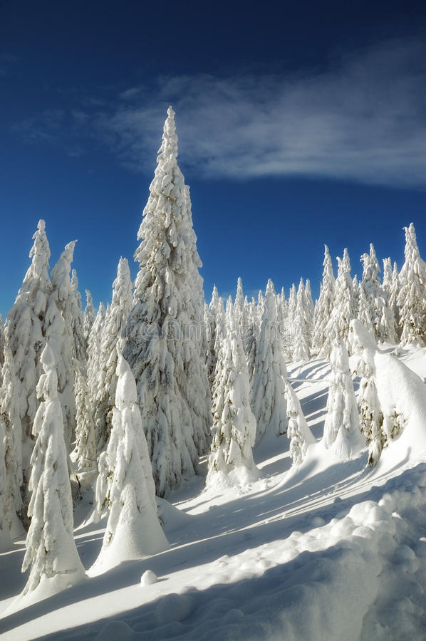 Winter landscape with snow in mountains royalty free stock image