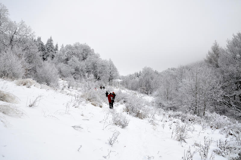 Winter landscape with snow in mountains royalty free stock photography