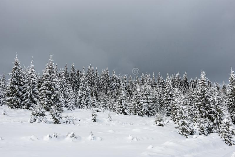 Winter landscape with snow on trees stock image