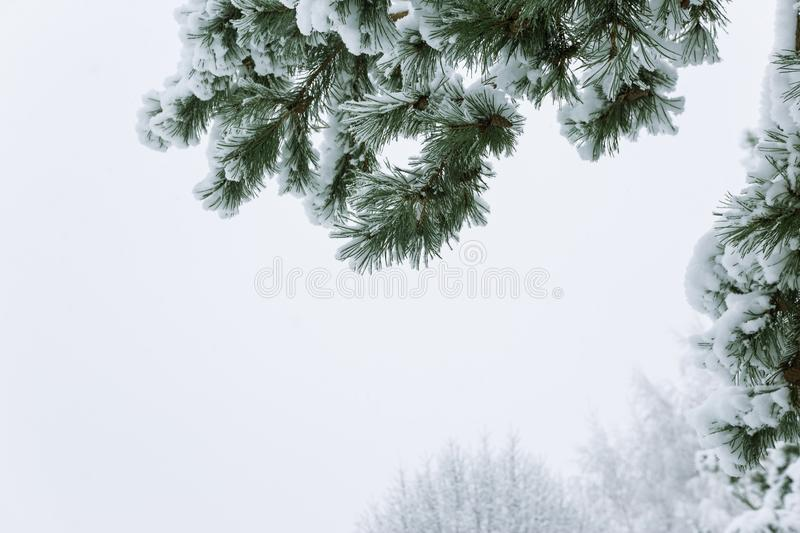 Winter landscape with snow trees. Winter landscape with snow and christmas trees. Merry christmas and happy new year greeting background royalty free stock images