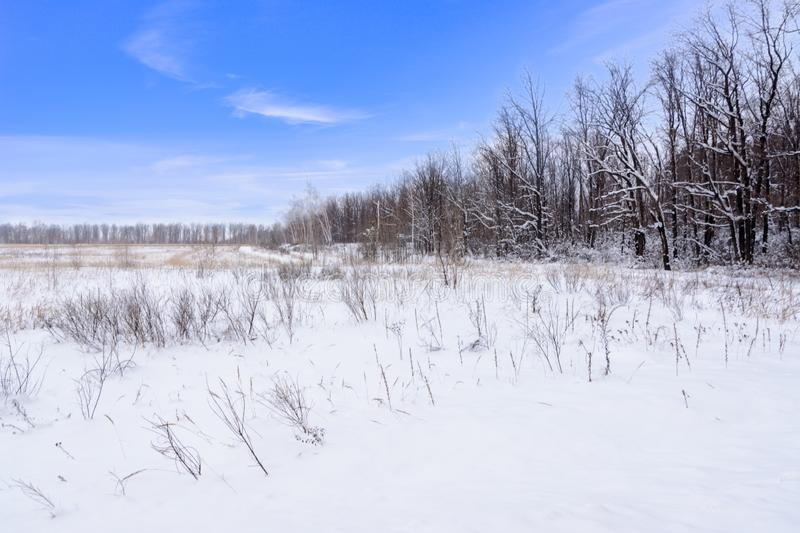 Winter landscape. Snowy field, trees and beautiful blue sky. Winter. Panorama royalty free stock images