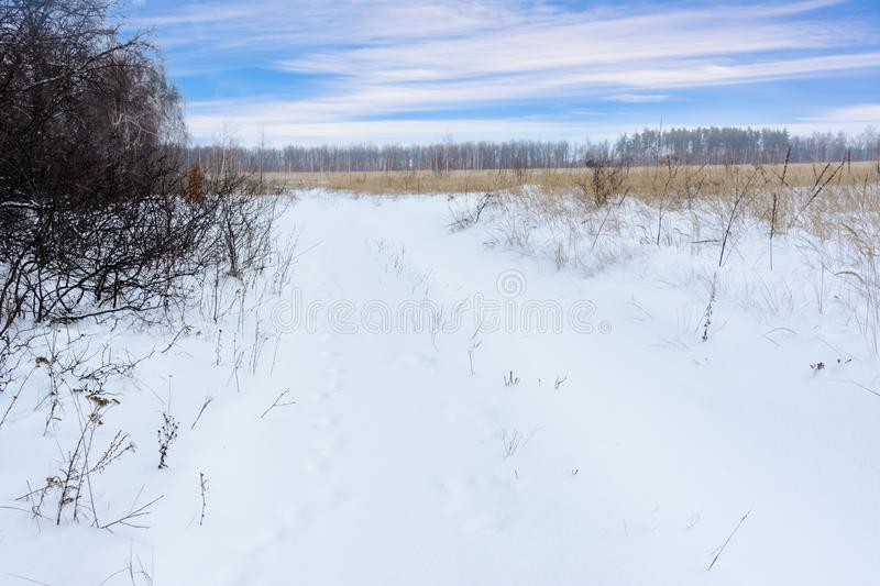 Winter landscape. Snowy field, trees and beautiful blue sky. Winter. Panorama stock photos