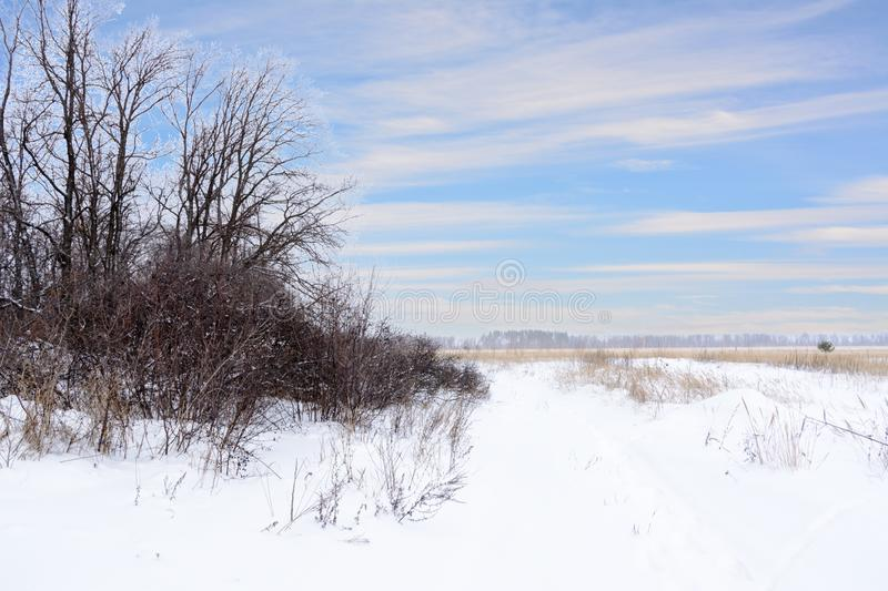 Winter landscape. Snowy field, trees and beautiful blue sky. Winter. Panorama royalty free stock photography