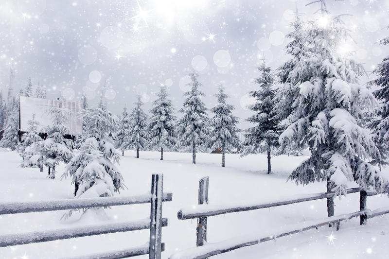 Winter landscape with snowy fir trees ad fence royalty free stock image