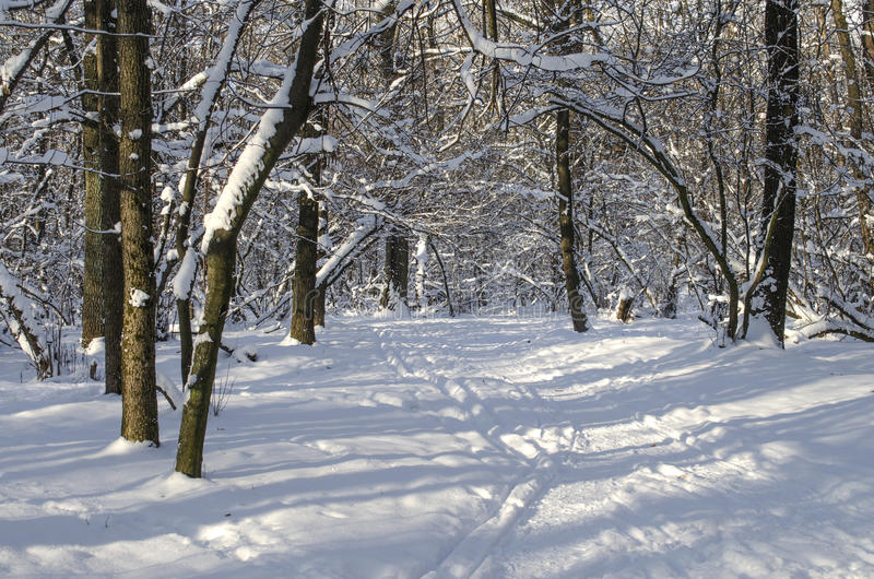 Winter landscape. Of snowy forest stock image