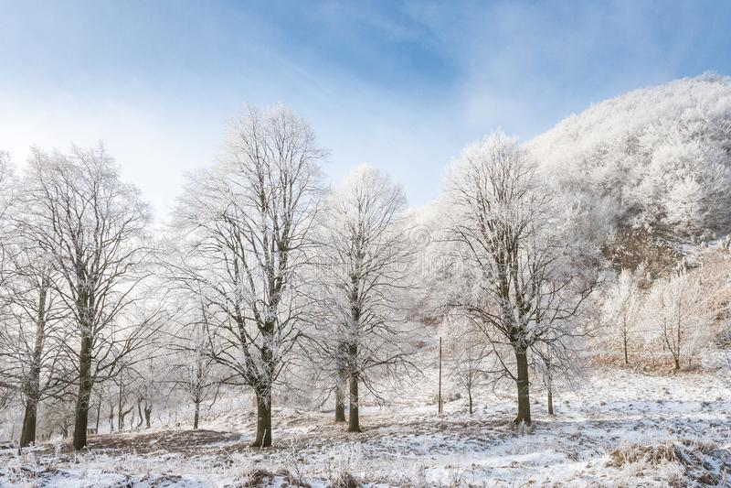 A Winter landscape. stock photo