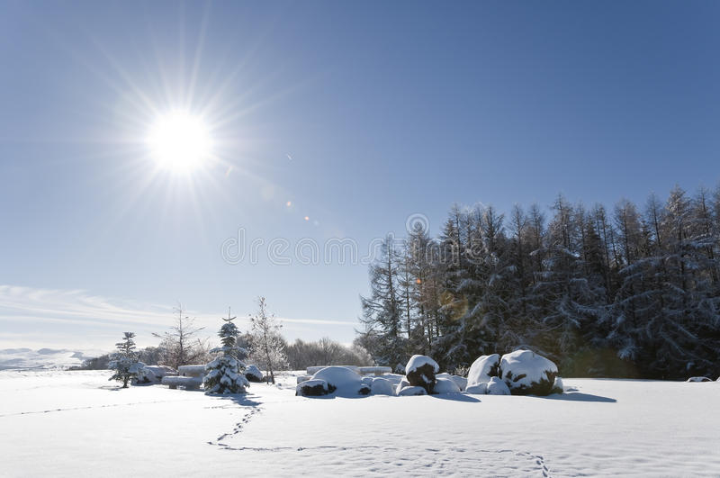 Winter landscape with some firs stock photos