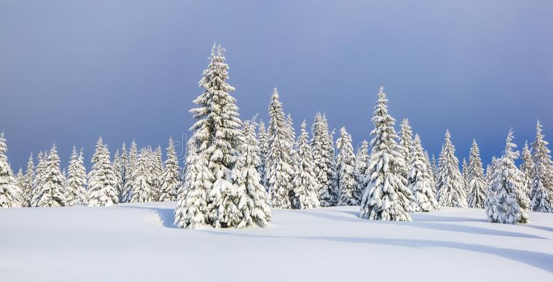 Winter landscape. Spectacular panorama is opened on mountains, trees covered with white snow, lawn and blue sky. Christmas forest.  stock photography